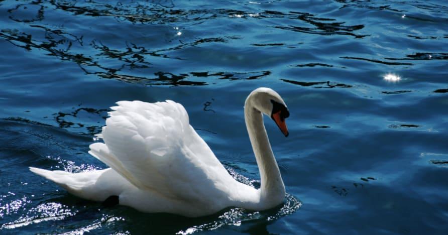 Ainsworth Gaming's Royal Swan: Μια πλήρης κριτική